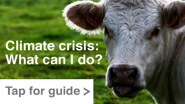 Guía: Crisis climática: ¿cómo puedo ayudar?