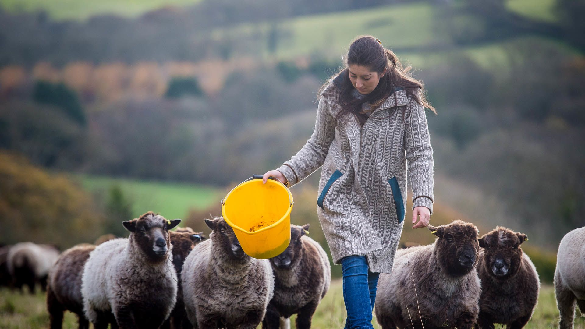 Women with sheep