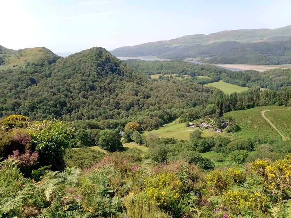 Woods and forest at Abergwynant, Gwynedd, looking to the Mawddwch estuary