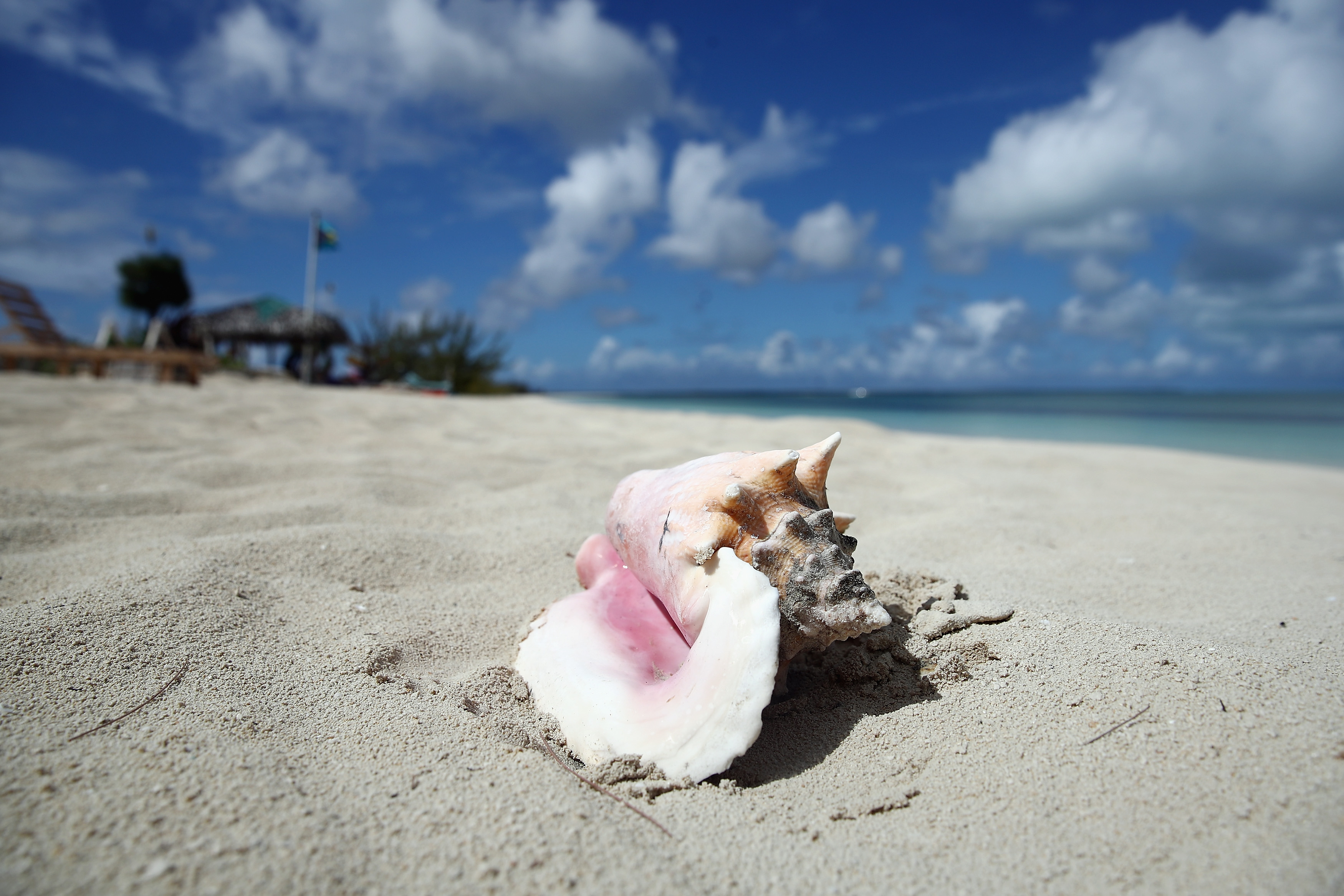 A shell lies on a white sand beach in this glamour shot of the Bahamas