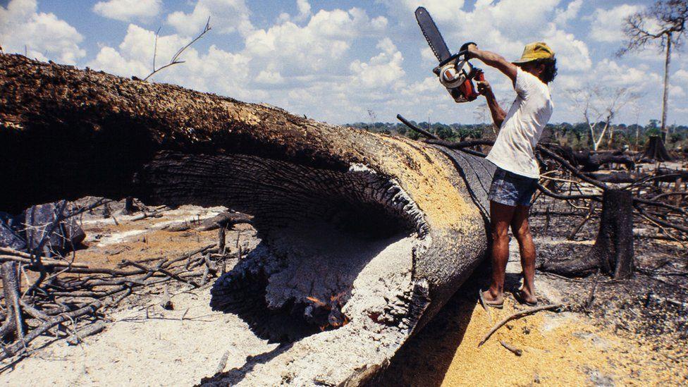 Hombre cortando árbol