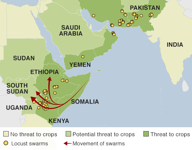 Map showing how locust swarms are infesting the Horn of Africa, both sides of the Red Sea and the India-Pakistan border. Swarms are also moving across Ethiopia and Kenya and could move to other countries.