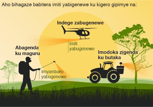 Igicapo ntangamakuru c'ukuntu imigwi y'inzige ishobora kurwanywa hakoreshejwe imiti yo gupoma bagenda n'amaguru, hakoreshejwe indege canke imodoka.