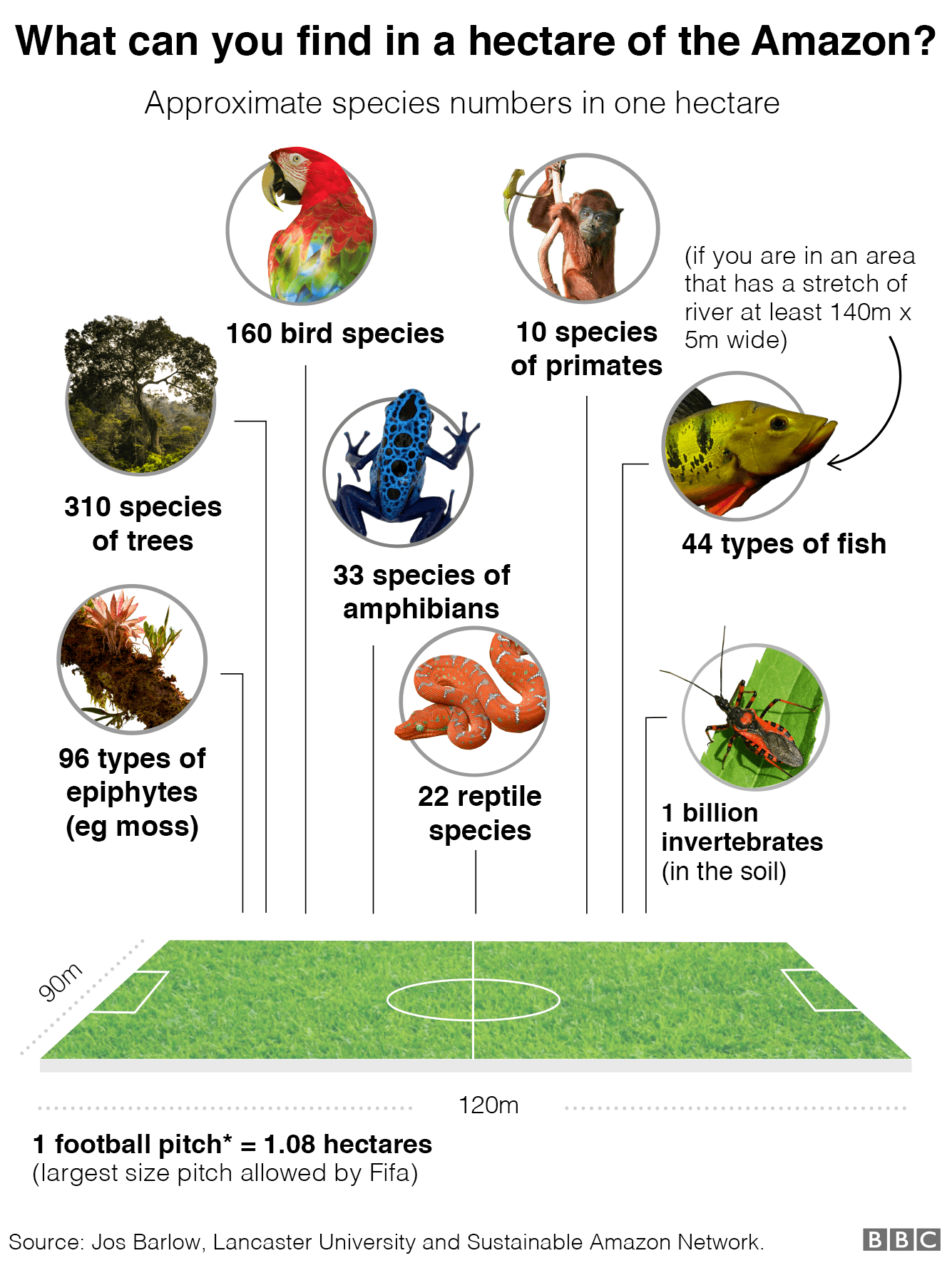Graphic showing the species it is possible to find in one hectare of the Amazon: 160 bird species, 10 primate species, 44 types of fish if you are in an area that has a stretch of river at least 140m by 5m wide, 33 species of amphibians, 22 reptile species, 96 types of epiphytes (eg moss) and 310 species of trees