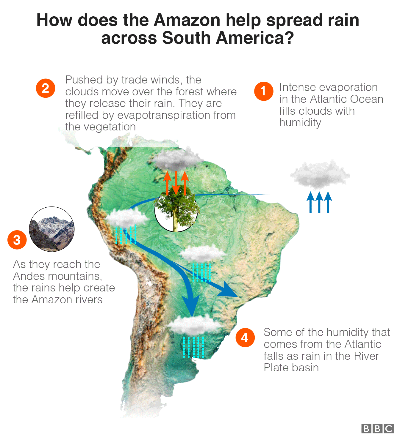 Graphic showing how the Amazon distributes rain around South America: 1: Intense evaporation in the Atlantic Ocean fills clouds with humidity 2: Pushed by trade winds, the clouds move over the forest where they release their rain. They are refilled by evapotranspiration from the vegetation 3: As they reach the mountains, the rains help create the Amazon rivers, 4: Some of the humidity that comes from the Atlantic falls as rain in the River Plate basin