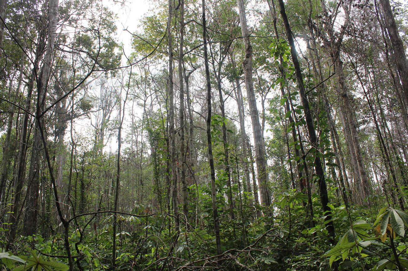 Degraded forest in Brazil