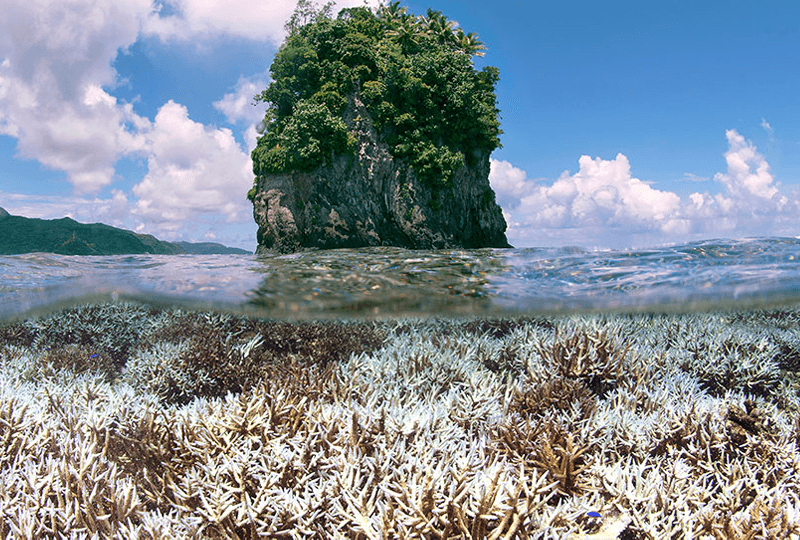 Coral surrounding an island in American Samoa, South Pacific Ocean, February 2015