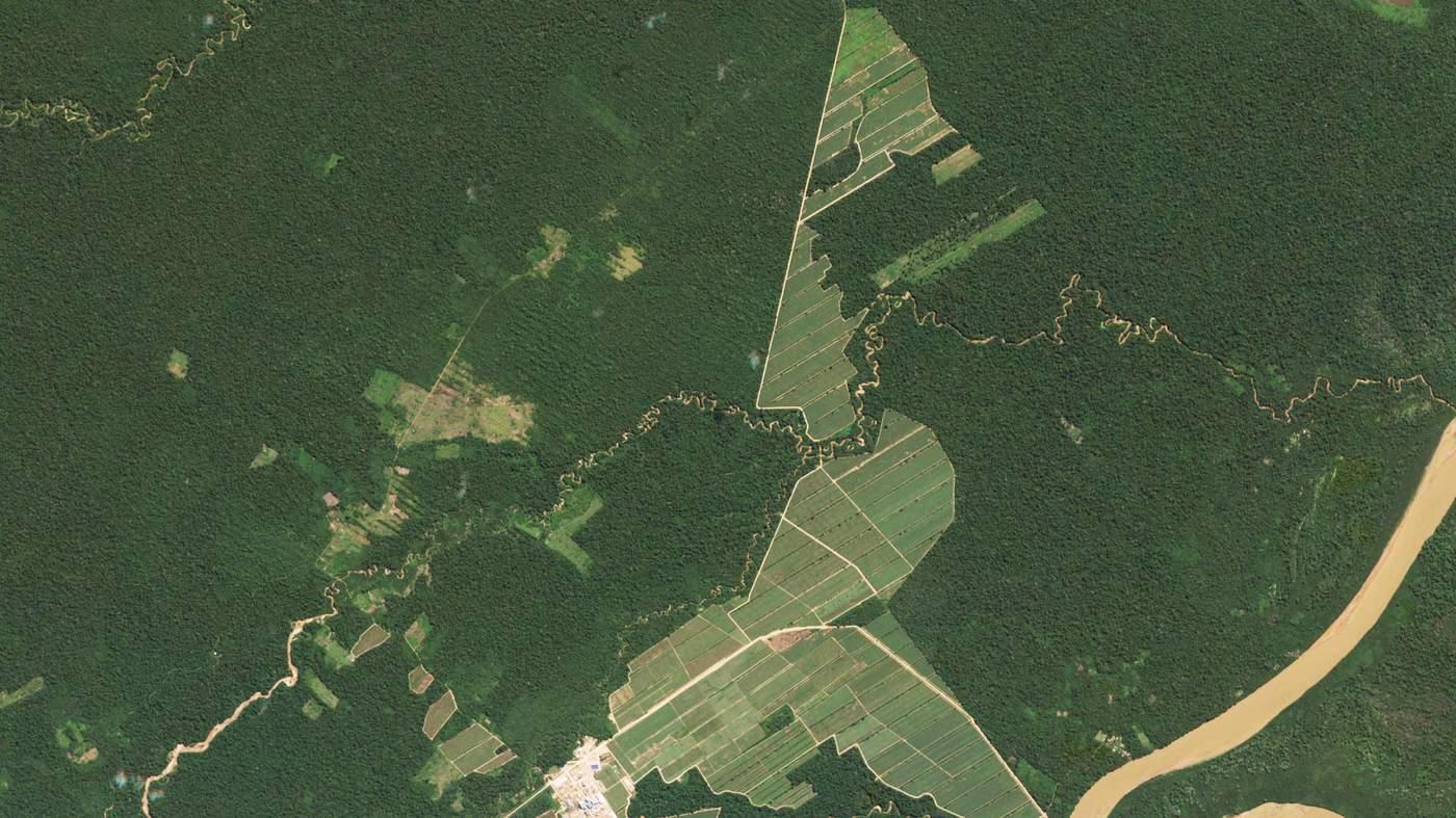 Серии снимков показывают динамику вырубки лесов Амазонии