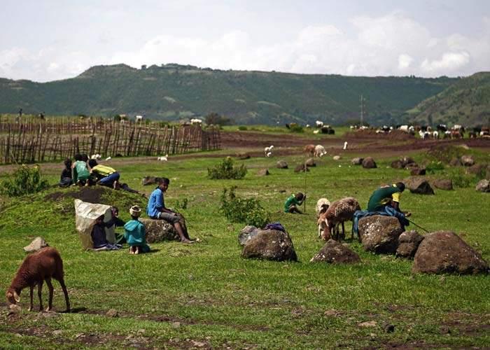ملف سد النهضة  Farming_sheep_ethiopia_700_smedkxr-mr_sboduzq