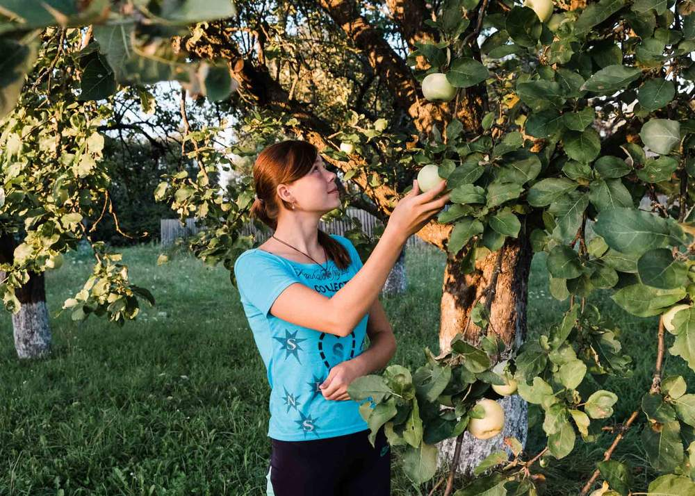 Олена збирає яблука у своєму саду