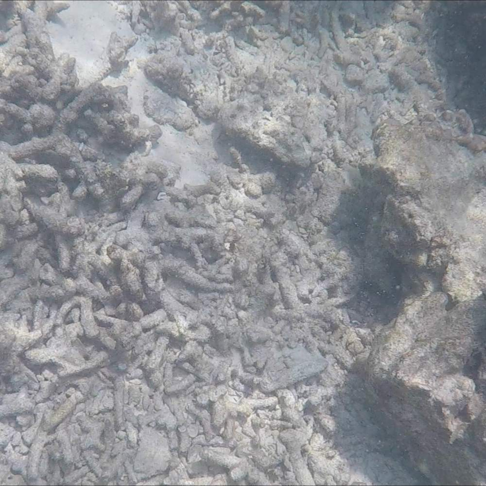 Most of the coral at Maya Bay was dead by 2017