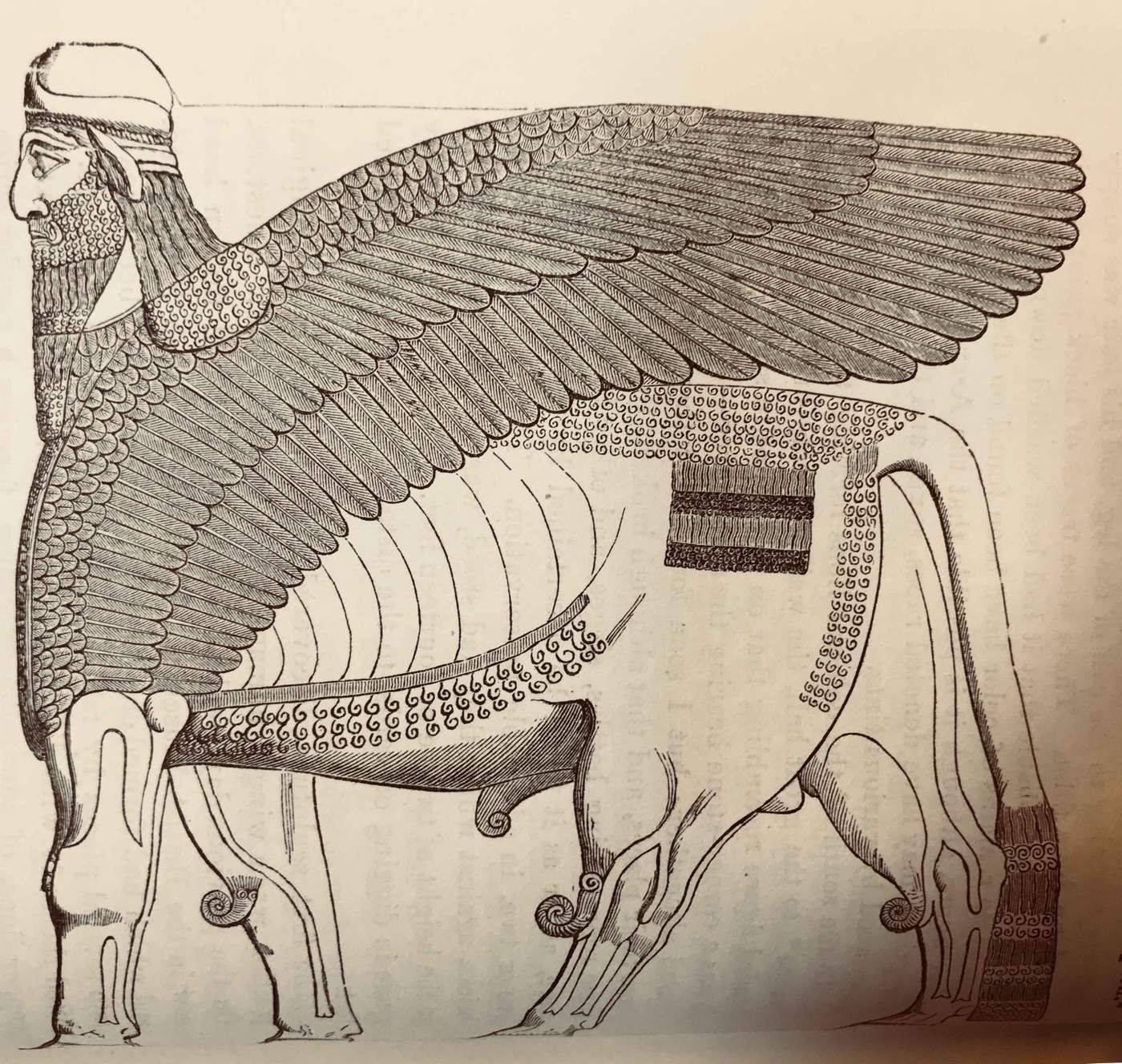 Illustration of a lamassu (circa 1850)
