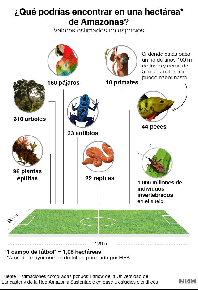 Gráfico de espécies que sería posible encontrar en 1 hectárea de Amazonas
