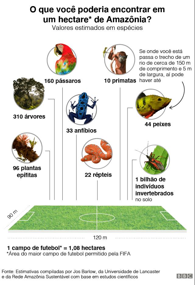 Gráfico de espécies que seria possível encontrar em 1 hectare de Amazônia