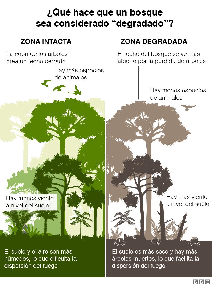 Gráfico sobre qué hace que un bosque sea considerado degradado