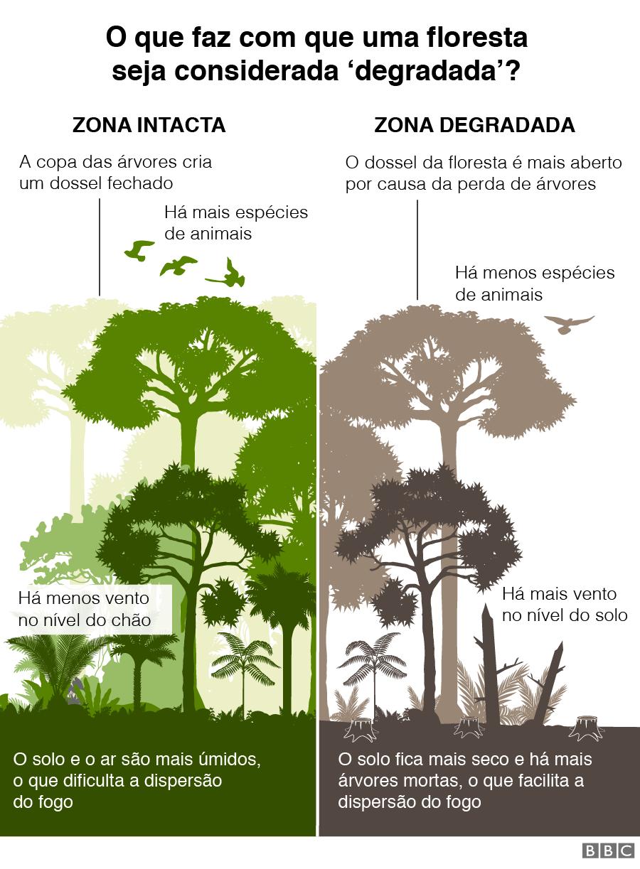 Gráfico sobre o que faz com que um bosque seja considerado degradado