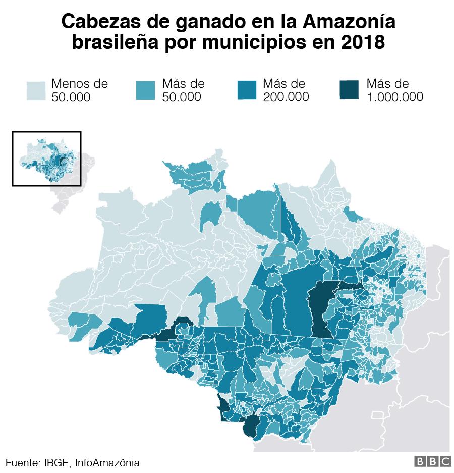 Gráfico de las cabezas de ganado en el Amazonas brasileño