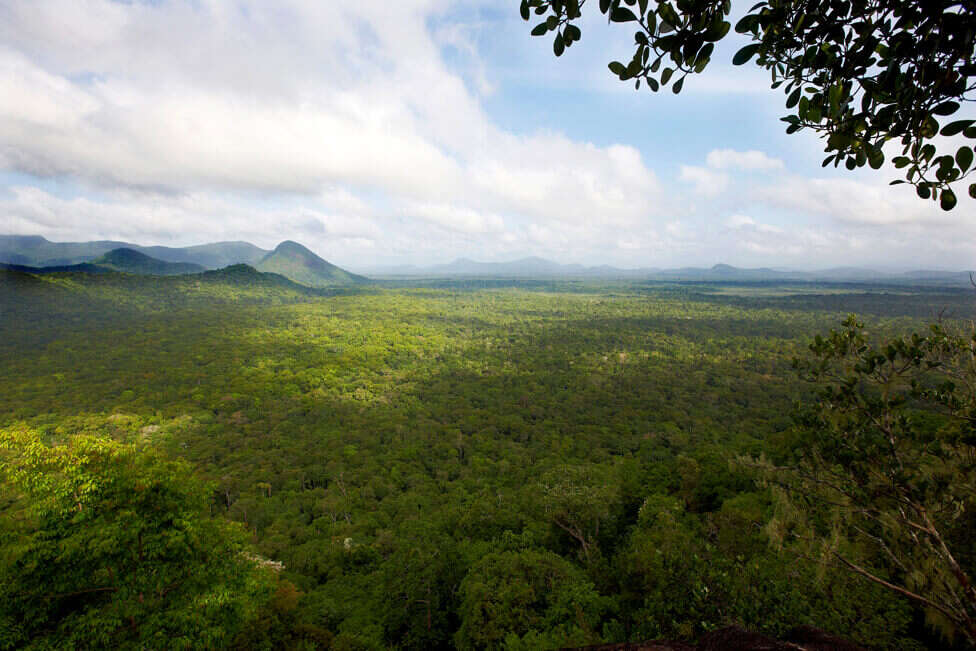 Vista aérea da Floresta Amazônica na Guiana