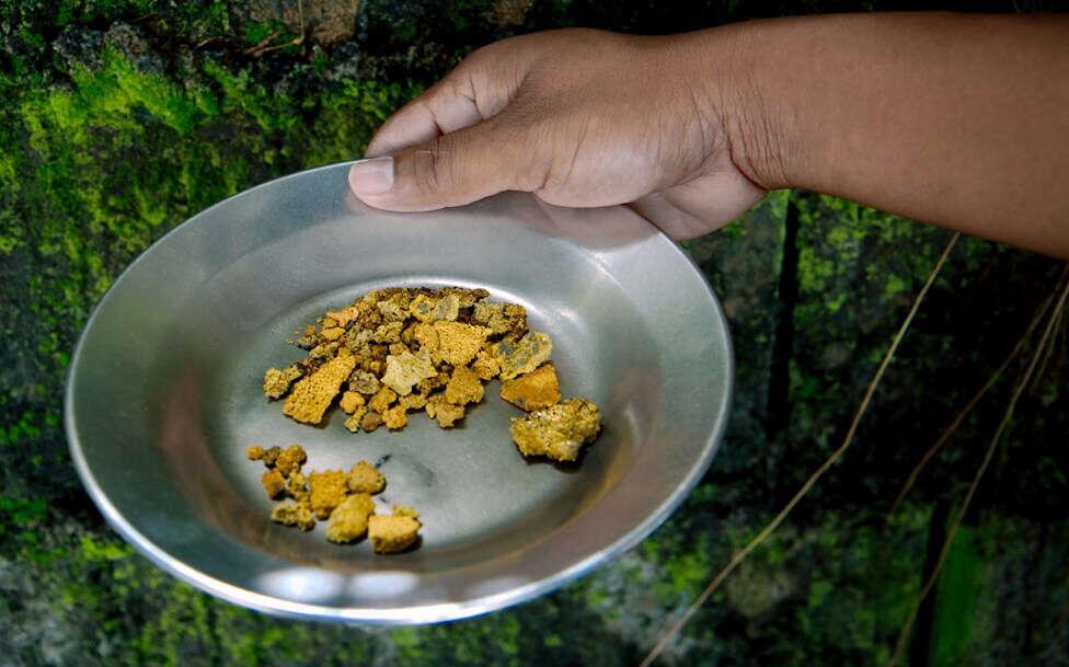 Persona con un plato de piedras de oro en Surinam