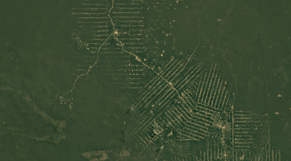 Satellite image of Rondonia, Brazil, in 1984