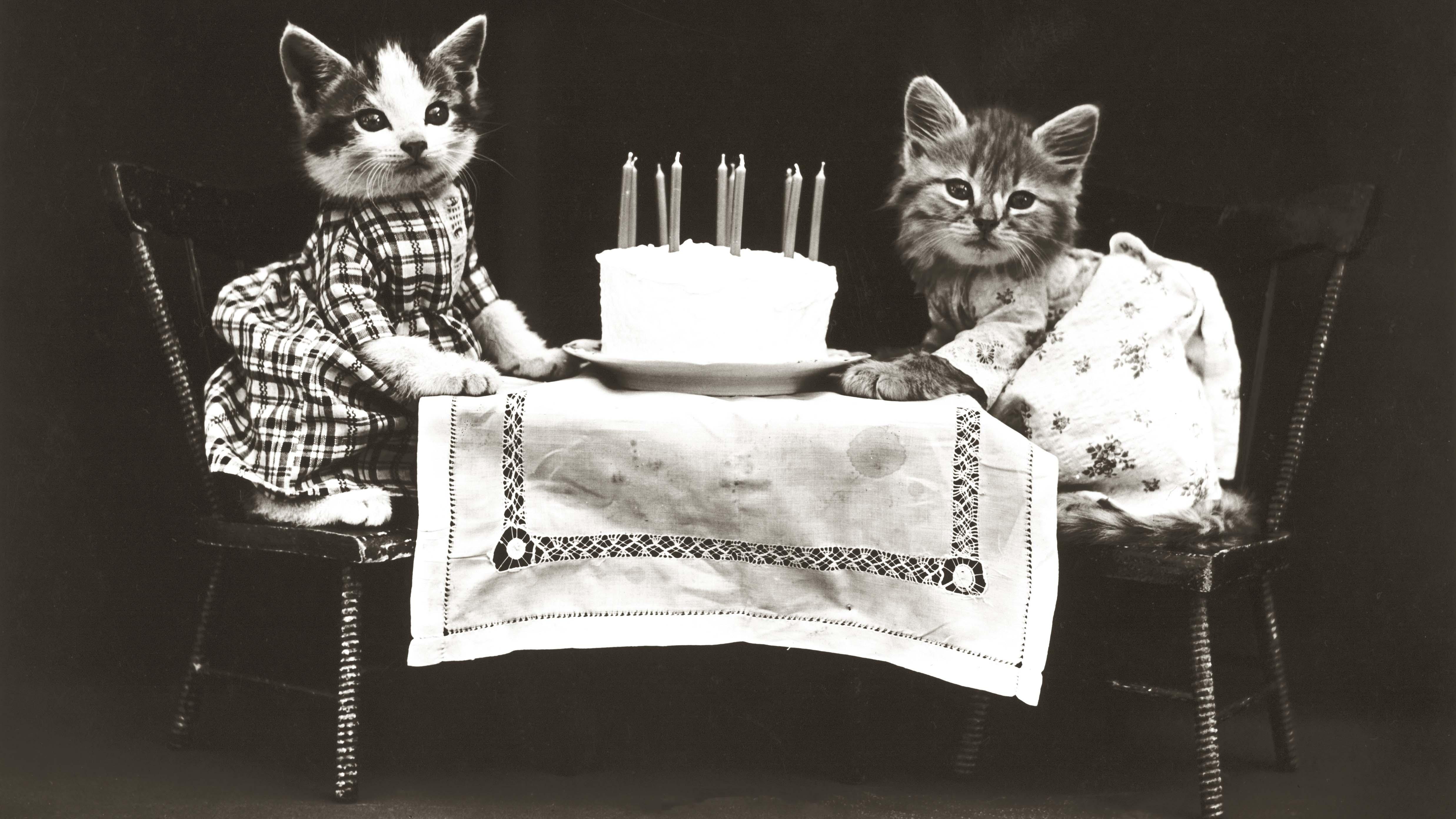 cats: an internet classic